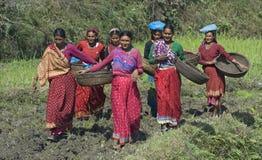 Senhoras com cesta 2 Foto de Stock
