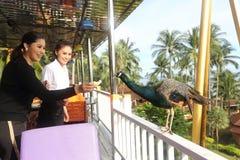 Senhorita de acampamento Tourism Queen Thailand 2017 da viagem da excursão imagens de stock