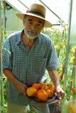 Senior. Harvest. Old man in straw hat Stock Photos