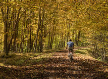 Senior adult man cycles on leaf covered trail Royalty Free Stock Photography