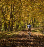Senior adult man cycles on leaf covered trail royalty free stock images