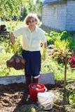 Senior adult picking potato Stock Photography