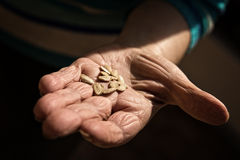 Senior adults hand with seed Royalty Free Stock Photo
