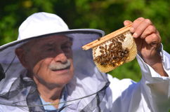 Senior apiarist making inspection in apiary. In the summertime Royalty Free Stock Images