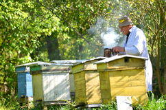 Senior apiarist is setting a fire in a bee smoker Stock Photography