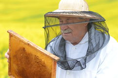 Senior apiarist working in the blooming rapeseed field Stock Photos