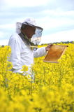 Senior apiarist working in the blooming rapeseed field Royalty Free Stock Photos
