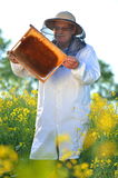 Senior apiarist working in the blooming rapeseed field Royalty Free Stock Images