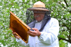 Senior beekeeper making inspection in apiary Stock Photo