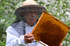Senior beekeeper making inspection in apiary Stock Image