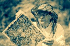 Senior beekeeper making inspection in apiary in the springtime Stock Image