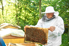 Senior beekeeper working at his apiary. Shot of a senior beekeeper wearing beekeeping costume working with bees harvesting honey from beehive copyspace stock image