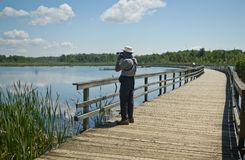 A senior bird watcher in marsh. A retired  60s man enjoys his leisure time watching birds in a peaceful,beautiful marsh on a sunny summer day Royalty Free Stock Photo