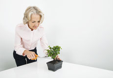 Senior businesswoman pruning plant at desk in office Royalty Free Stock Photo