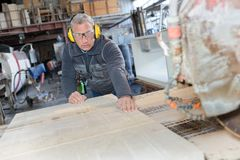 Senior carpenter with competence working on band saw. Senior royalty free stock image