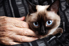 Senior with cat Royalty Free Stock Images