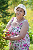 Senior cheerful woman at work in own garden at summer Royalty Free Stock Photo