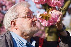 Senior with Cherry Blossom Stock Photography