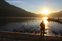 Senior citizen feeding ducks. Ducks flying in the sunset toward a lonely senior woman as she feeds mallards by a lake in the mountains Stock Image