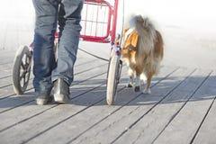 Senior citizen with walking frame Stock Images