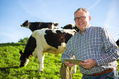 Senior in countryside next to cows in a pasture Stock Photos