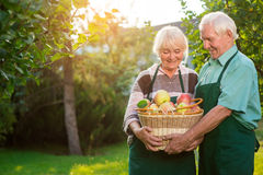 Senior couple and apple basket. Man with women outdoor. Holding the wealth Royalty Free Stock Image