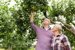 Senior couple with apple tree at summer garden Royalty Free Stock Image