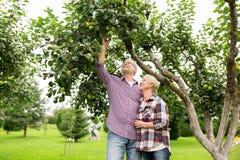 Senior couple with apple tree at summer garden Royalty Free Stock Photo
