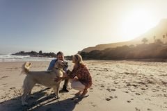 Senior couple with pet dog on beach stock photo