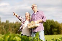 Senior couple with box of vegetables on farm Stock Photo