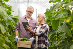 Senior couple with cucumbers and tablet pc on farm Stock Image