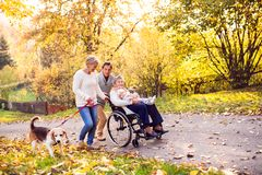 Extended family with dog on a walk in autumn nature. Senior couple with a dog and elderly women in wheelchair holding a baby. An extended family on a walk in Royalty Free Stock Images