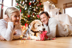 Senior couple with dog in front of Christmas tree Stock Photography