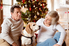 Senior couple with dog in front of Christmas tree Royalty Free Stock Photos