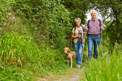 Senior couple with dog on hiking trail. Happy senior couple walking with dog on a hiking trail stock image
