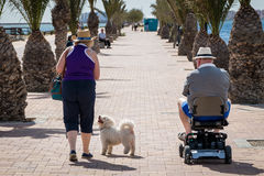 Senior Couple and Dog Strolling on Seaside Promenade Royalty Free Stock Image
