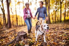 Senior couple with dog on a walk in an autumn forest. Royalty Free Stock Image