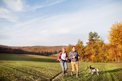 Senior couple with dog on a walk in an autumn nature. Stock Photo