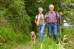 Senior couple doing Nordic Walking. Happy senior couple doing Nordic Walking with dog in a forest Stock Photography