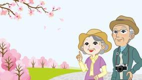 Senior couple enjoy the Cherry blossoms viewing Stock Photos