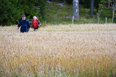 Senior couple in field. Senior couple taking a walk true a growing field Royalty Free Stock Photo