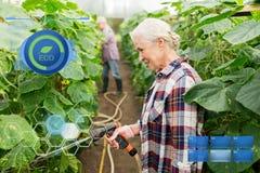 Senior couple with garden hose at farm greenhouse Stock Photos