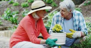 Senior couple gardening. In park stock video footage