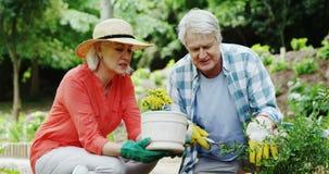 Senior couple gardening. In park stock footage