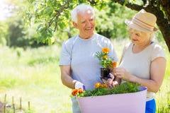 Senior couple gardening. Smiling happy elderly seniors couple gardening Royalty Free Stock Photography