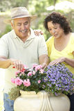 Senior Couple Gardening Together Stock Images