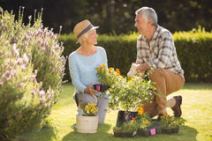Senior couple gardening together. Portrait of happy senior couple gardening together in backyard Stock Image