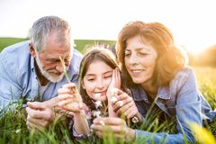 Senior couple with grandaughter outside in spring nature, relaxing on the grass. Stock Photos