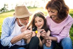 Senior couple with granddaughter outside in spring nature, relaxing on the grass. Senior couple with granddaughter outside in spring nature, sitting on the royalty free stock photos