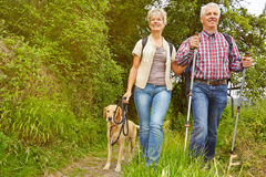 Senior couple on a hike in a forest Royalty Free Stock Photo